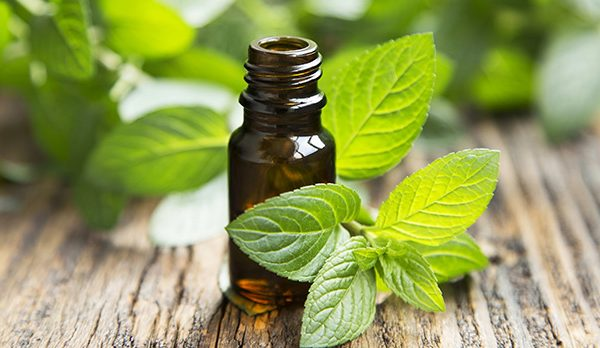 Mentha Oil (Mint)